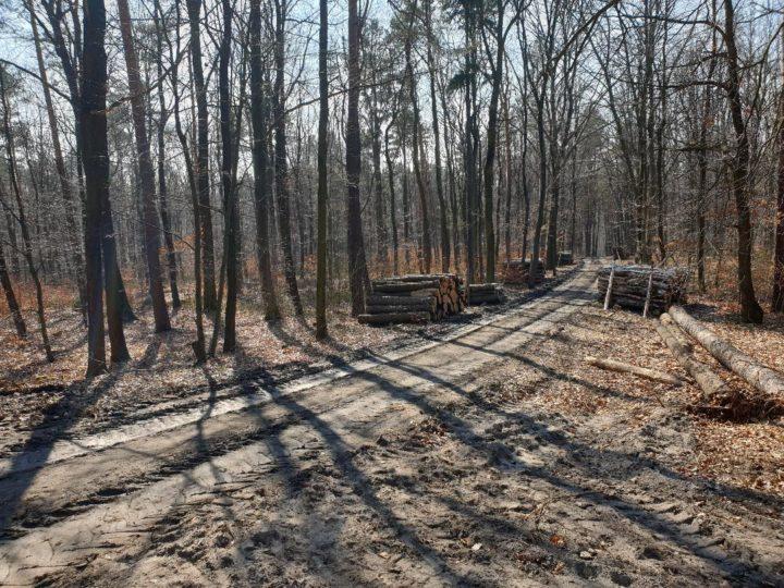 Ciężki sprzęt w Lesie Łabędzim