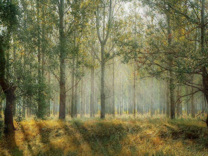 Tymczasowy zakaz wstępu do lasów