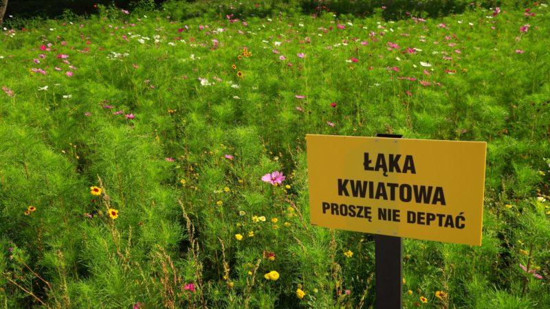 Czy Rybnicka zieleń poradzi sobie z suszą? Koszenie traw