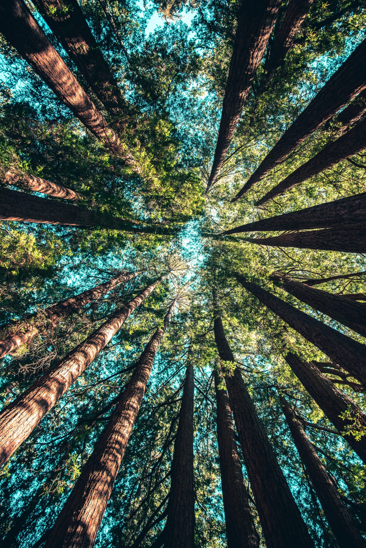 By chronić europejskie lasy