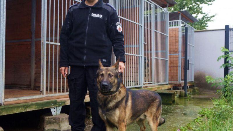 Policyjny pies wskazał kryjówkę złodzieja