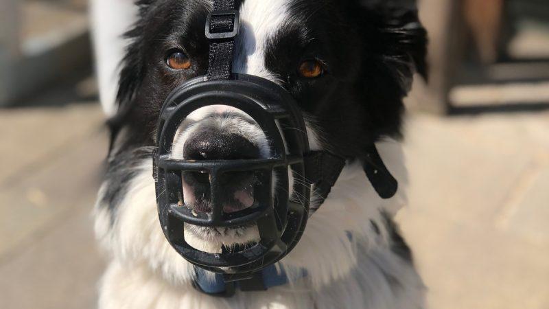 Wyższe mandaty dla właścicieli psów