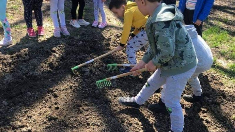 Łąki kwietne w Czerwionce-Leszczynach